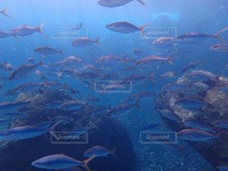 三宅島の魚の群れの写真・画像素材[1230756]