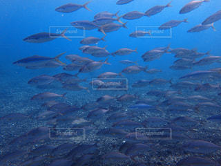 スキンダイビング中に出会った魚の大群の写真・画像素材[1230757]