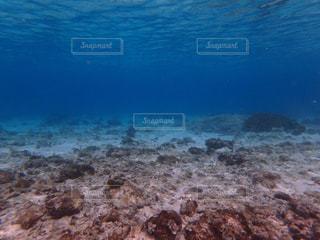 水中の写真・画像素材[1230886]