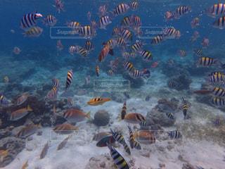 魚の群れの写真・画像素材[1230887]