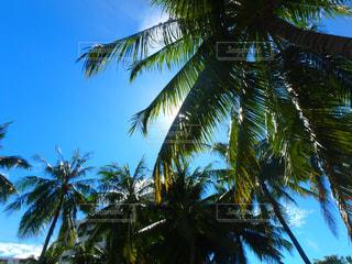 ヤシの木とビーチの写真・画像素材[1230888]