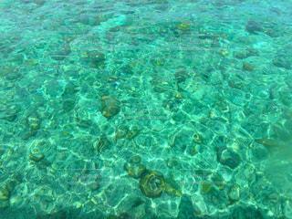 エメラルドグリーンの海の写真・画像素材[1230889]