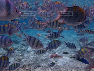 魚の群れの写真・画像素材[1230891]