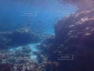 伊豆の海の写真・画像素材[1236039]