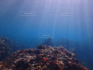 伊豆の海の写真・画像素材[1236040]
