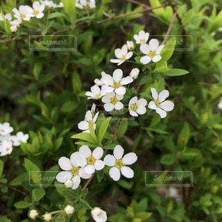 近くの花のアップの写真・画像素材[1191811]