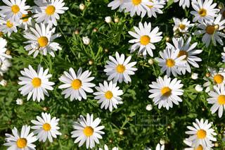 近くに黄色い花のアップ - No.1199504