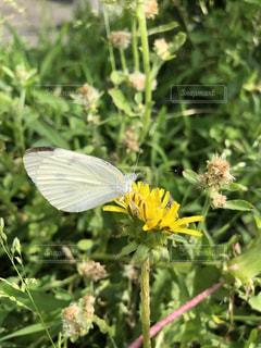 蝶々!の写真・画像素材[1283419]
