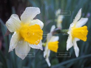 近くに黄色い花のアップの写真・画像素材[1193001]
