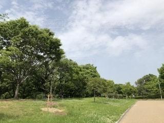 芝生のフィールドのツリーの写真・画像素材[1193244]
