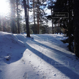 フィンランドの森での写真・画像素材[1862510]