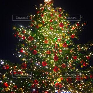 クリスマス ツリーの写真・画像素材[1198941]