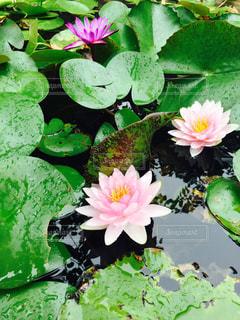花の写真・画像素材[1200257]