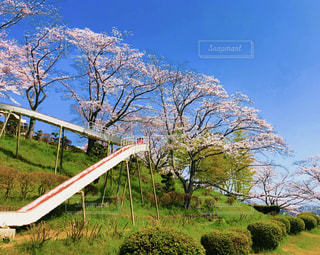 背景の木と大規模なグリーン フィールドの写真・画像素材[1195965]