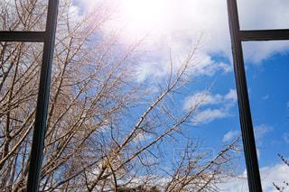 木からぶら下がって記号の写真・画像素材[1206804]
