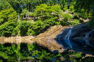 木々 に囲まれた水の体の写真・画像素材[1239923]