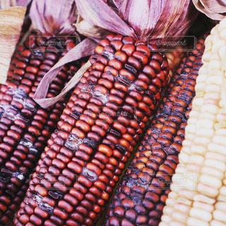 トウモロコシの写真・画像素材[1194126]