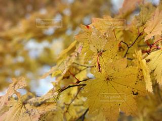 近くの木のアップの写真・画像素材[1194284]
