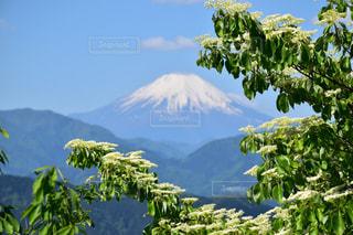 高尾山からの富士の写真・画像素材[1194913]