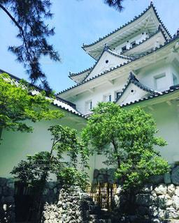 夏の大垣城の写真・画像素材[1194225]