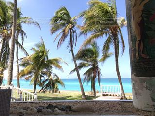 ヤシの木とビーチの写真・画像素材[1195042]