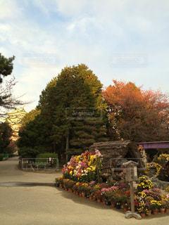 夕方の名古屋城 - No.1195054