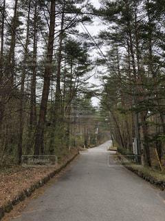 道の端に木のパス - No.1195073