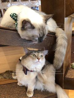 木製テーブルの上に座っている猫 - No.1195077