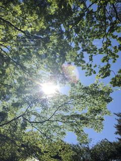 近くの木のアップ - No.1195080