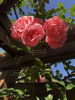 近くの花のアップ - No.1195082