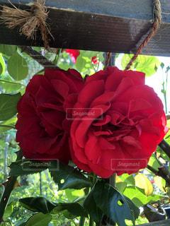 近くの花のアップ - No.1195083