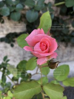 近くの花のアップ - No.1195085