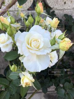 近くの花のアップ - No.1195088