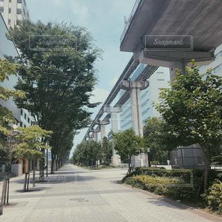 建物の側に木の写真・画像素材[1316461]