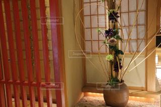 和風のお店のお花の写真・画像素材[1511068]