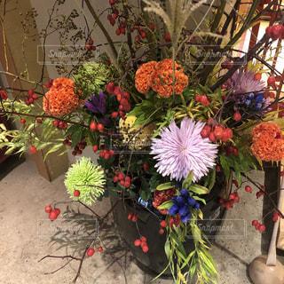 植物の花の花瓶の写真・画像素材[1511069]