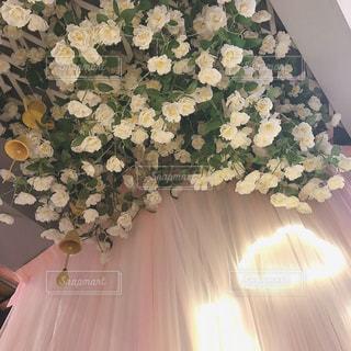 近くの花のアップの写真・画像素材[1511103]