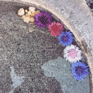 水面の花の写真・画像素材[1855854]