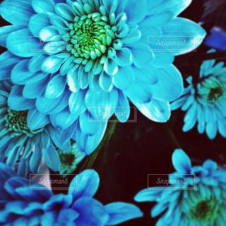 Flowerの写真・画像素材[1195206]