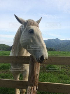 馬の写真・画像素材[38864]