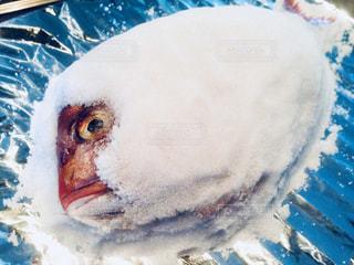 水面下を泳ぐ魚たちの写真・画像素材[1201635]