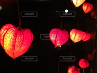 ランプの写真・画像素材[1201789]