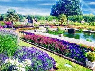 近くのフラワー ガーデンの写真・画像素材[1245952]