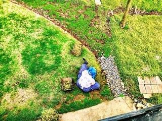庭の写真・画像素材[1248795]