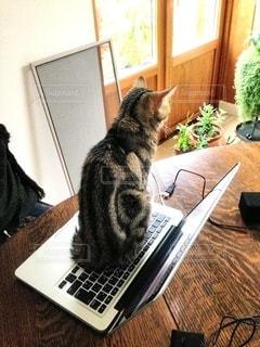 テーブルの上に座って猫の写真・画像素材[1292949]