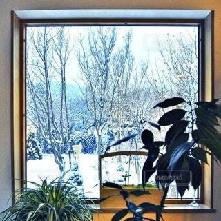 窓から雪景色の写真・画像素材[1292954]