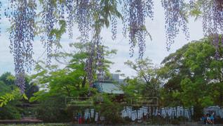 鎌倉の写真・画像素材[1238835]