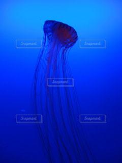 江ノ島水族館のクラゲの写真・画像素材[1253997]