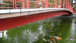 赤い橋の下を泳ぐ鯉の群れの写真・画像素材[1397903]