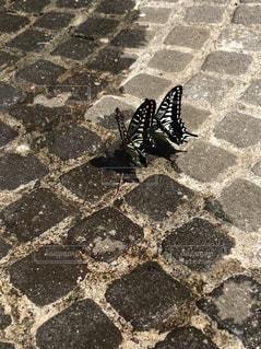 蝶のカップルの写真・画像素材[1397952]
